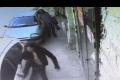 Watch: Pieta' car vandals identified, arrested