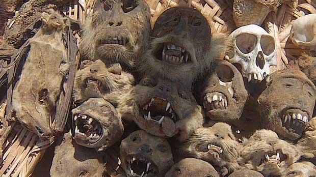 Monkey skulls at the fetish market.