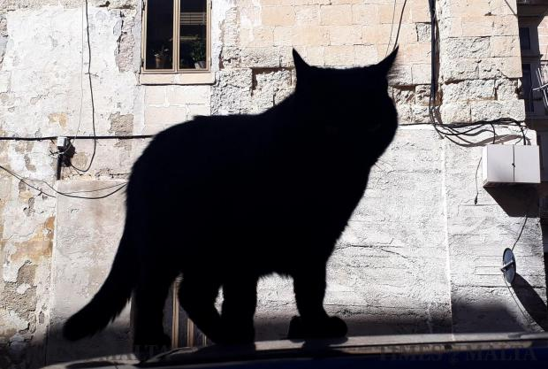 A cat walks on a car in Valletta on October 13. Photo: Chris Sant Fournier