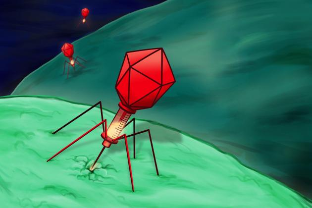 Watch: Bacteria killers - the story of Phage therapy (ARTE)