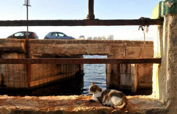A cat takes a rest at 'Il-Fossa' in Valletta on November 15. Photo: Chris Sant Fournier