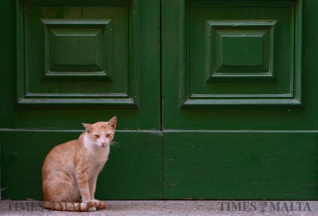 A ginger cat sits on a step in Valletta on June 10. Photo: Matthew Mirabelli