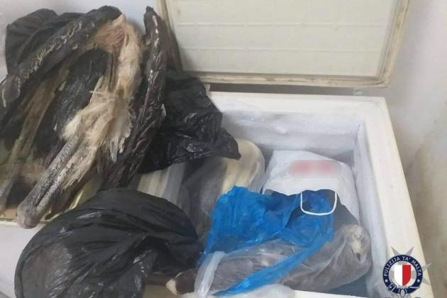 Storks and eagles among dead protected birds found in Mosta shop