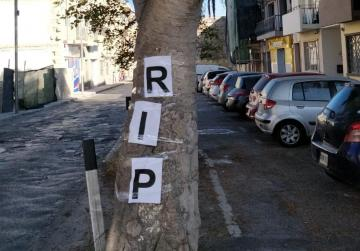 Dear Balzan trees, rest in peace