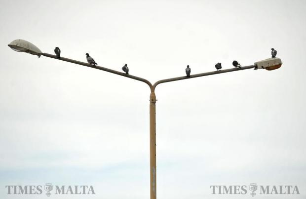 Pigeons perch themselves on a lamppost above the Valletta bus terminus on October 20. Photo: Chris Sant Fournier