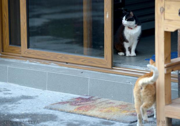A cat stands guard at a restaurant in Valletta on January 20. Photo: Matthew Mirabelli