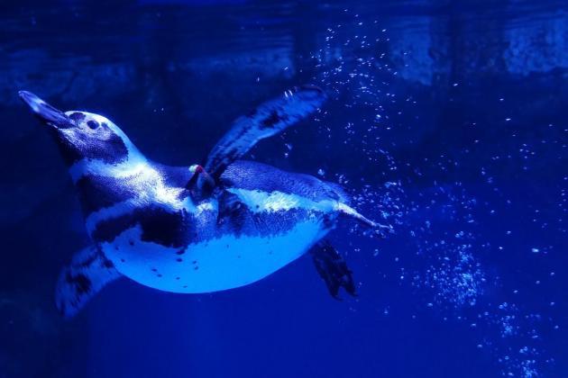 Inter-species lockdown meet-up at Japan aquarium
