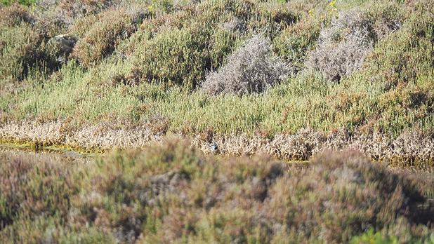 Il-Ballut ta'Marsaxlokk comprises three habitats that host particular flora and fauna. Photo: Nature Trust − FEE Malta