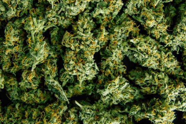Suspected cannabis dealer denied bail