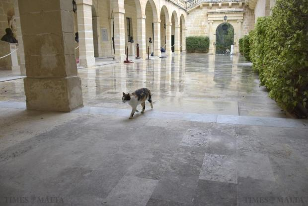 A cat walks in a courtyard at San Anton Palace shortly before the arrival of Britain's Queen Elizabeth on November 26. Photo: Mark Zammit Cordina