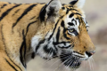 Earthquakes or tiger attacks: understanding fear can help prevent disasters