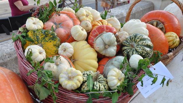 Maltese pumpkins. Photo: Victor B. Caruana