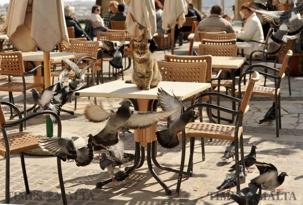 A cat watches as pigeons take flight at the Upper Barrakka Garden on February 2. Photo: Chris Sant Fournier