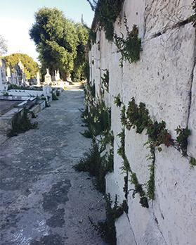 Overgrown weeds block the passageways to visitors at the cemetery.