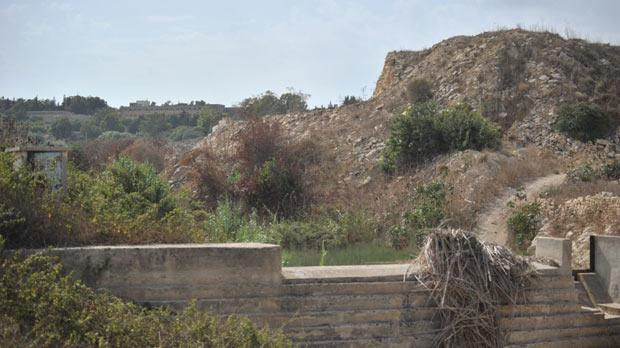 The mite is only found in Wied is-Sewda in the limits of Qormi. Photo: Jason Borg