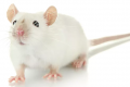 Artificial intelligence could save thousands of lab mice