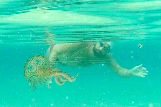Neil Agius gets up close and personal with a jellyfish as part of his training. Photo: Neil Agius/Facebook