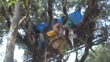 Indian villagers live in trees to escape elephants