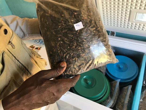 A farmer holds a bag of whole freeze-dried crickets for sale. Photo: Reuters