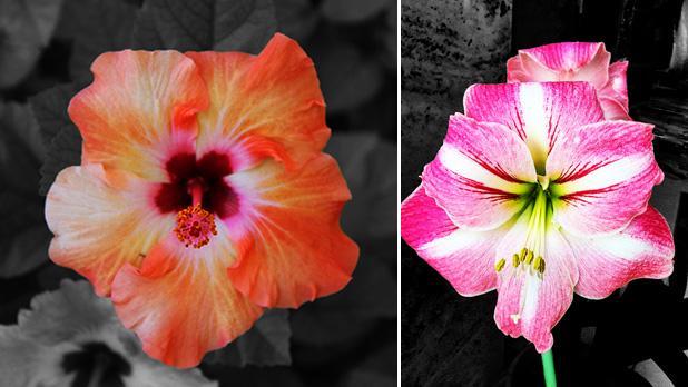 Hibiscus. Right: Lily. Photos: Adrian Farrugia