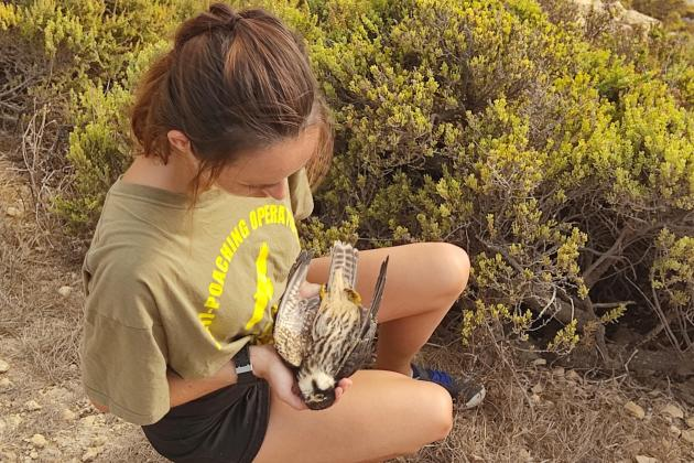 Birds of prey 'massacred' with police presence low - Birdlife