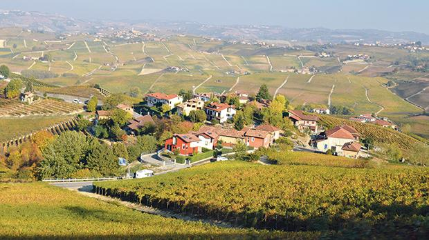 Typical vine-carpeted Langhe lanscape