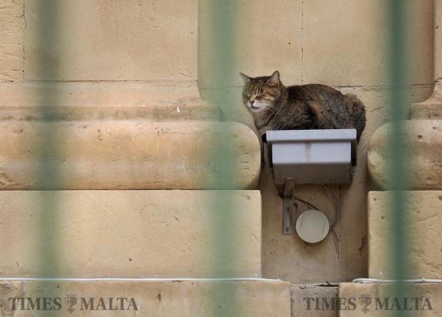 A cat sits on top of a floodlight intended to illuminate the Malta Stock Exchange in Valletta on February 2. Photo: Chris Sant Fournier