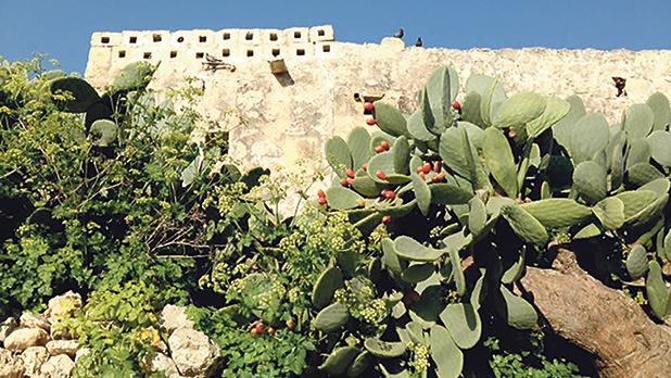 The historic barumbara (dovecote) that residents say is Mġarr's oldest structure.