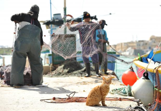 Fishermen prepare their nets while a cat looks on at Marsaxlokk on March 7. Photo: Chris Sant Fournier