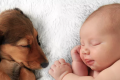 Babies and pets: a guide for new parents