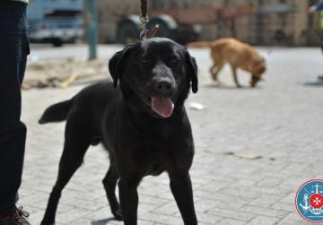 Sophie the sniffer dog leads Customs to €22,000
