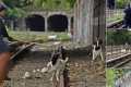 Pun-fest after goats wander onto New York train track