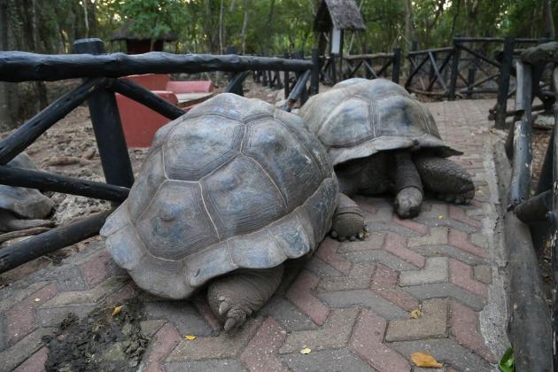'Africa's oldest' tortoise dies in Nigeria