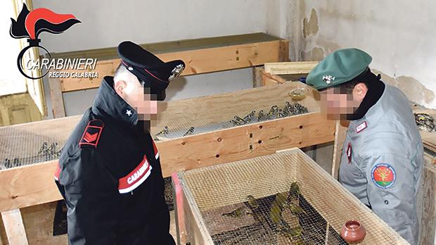 Carabinieri-led investigations saw two suspects involved in poaching and trafficking of endangered bird species, identified and prosecuted in Italy.