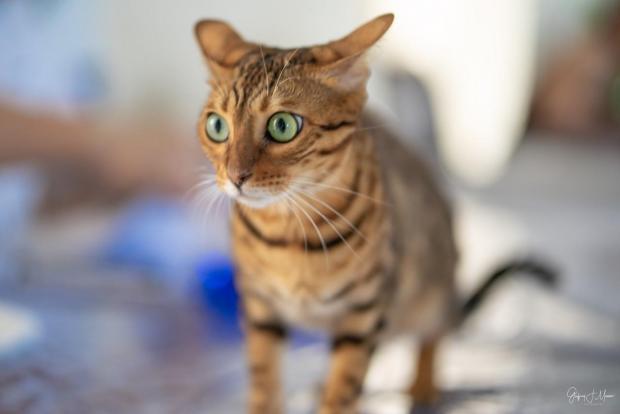 The World Cat Show in Malta