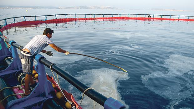 The Federation of Maltese Aquaculture Producers has called for the industry to be safeguarded. File photo: Jonathan Borg