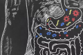 Probiotics: a first look at what's going on in the gut