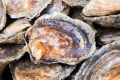 And finally some good news: oyster farms could flourish once again