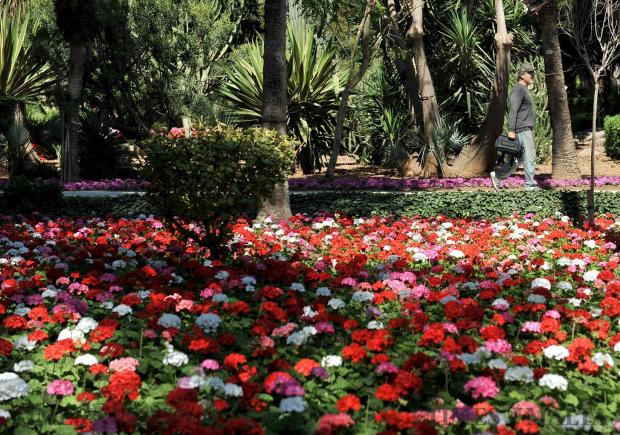 A man takes a stroll by a flowerbed at San Anton Gardens on May 22. Photo: Chris Sant Fournier