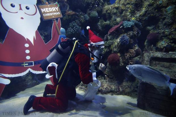 A diver dressed as Santa Claus feeds fish inside a fish tank at the Malta National Aquarium in Qawra on December 19. Photo: Darrin Zammit Lupi