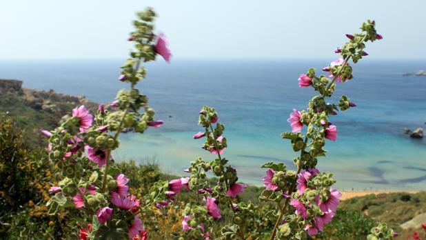 Għajn Tuffieħa. Photo: Marija Brzovska