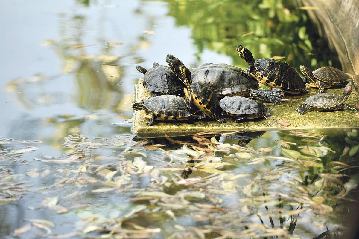 Let experts take care of animals at San Anton Gardens – commissioner