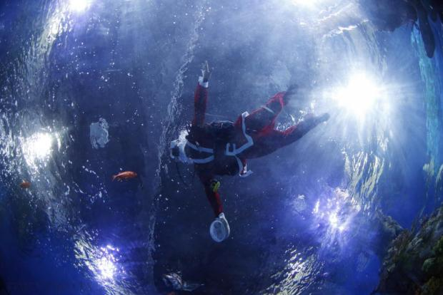 A diver dressed as Santa Claus swims inside a fish tank before feeding fish at the Malta National Aquarium in Qawra on December 19. Photo: Darrin Zammit Lupi