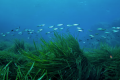 Seagrass could be the solution for carbon storage