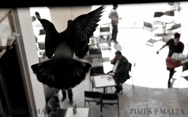 A pigeon takes flight over coffee drinkers in Valletta on May 2. Photo: Chris Sant Fournier