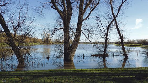 Winter trees in flooded fields by the River Brue.