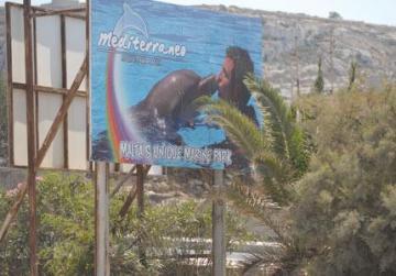 Malta dolphin park listed among 'cruellest' destinations