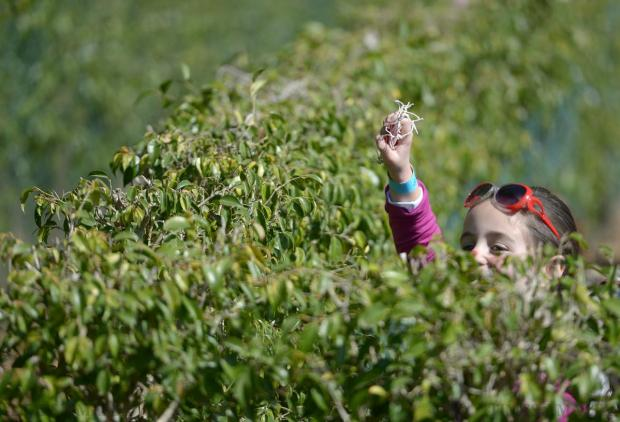 A young girl triumphantly holds up the Easter treat she found hidden in the San Anton Gardens maze during an Easter egg hunt held on April 7 to raise money for Inspire. Photo: Matthew Mirabelli