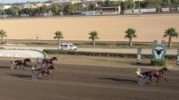 Photo: Mike Orland - Malta Trot Racing