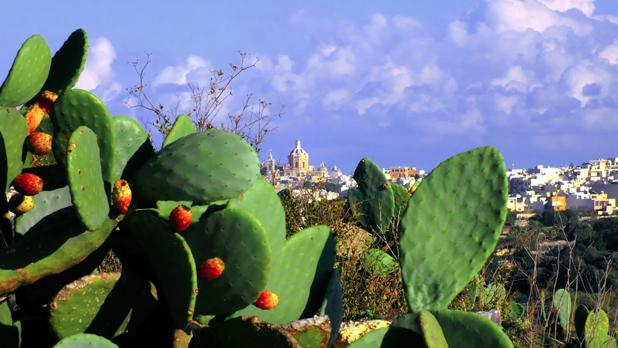 Rabat Parish Church. Photo: Choy Hong (Jasmine) Grech